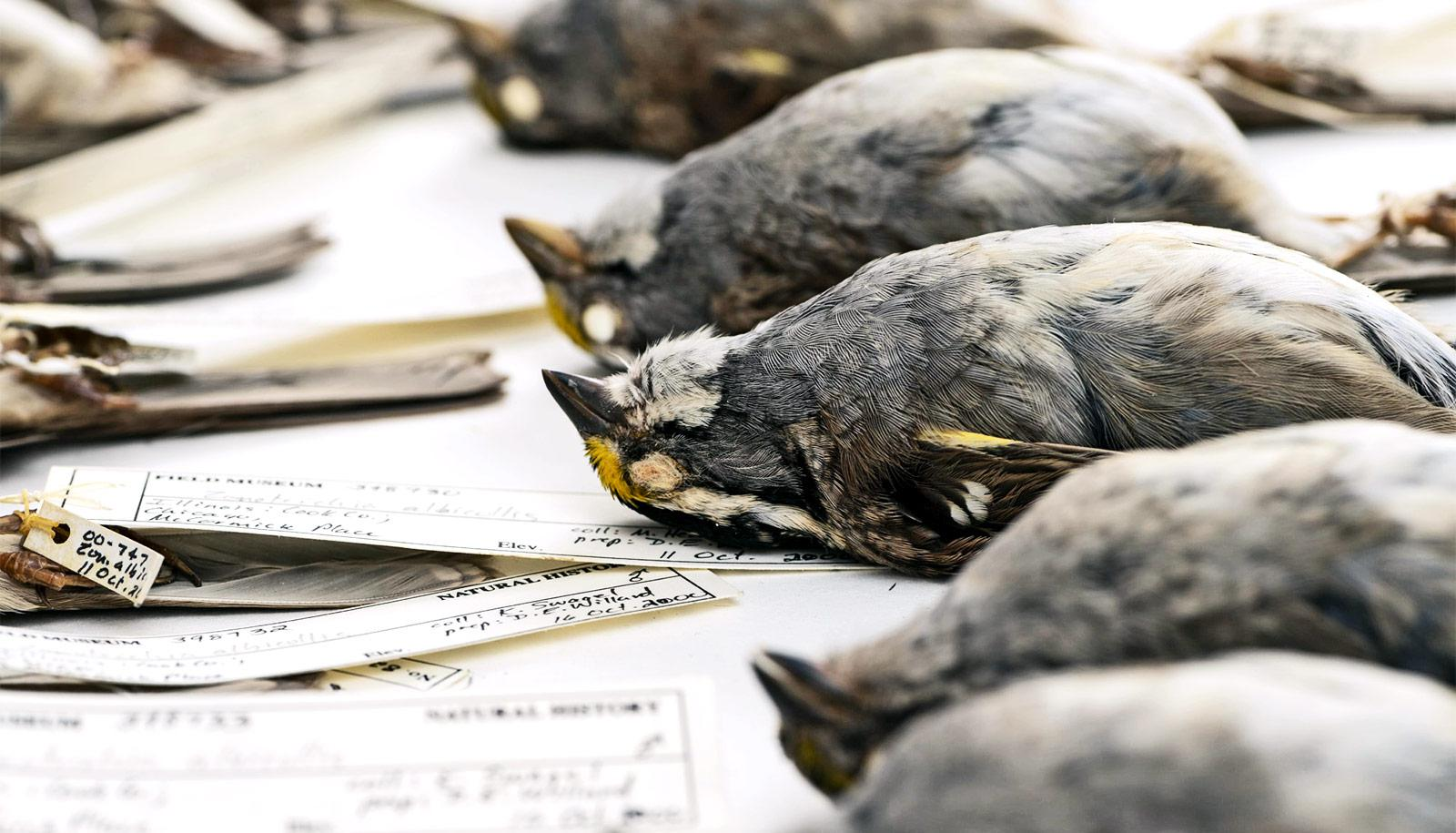 Artificial Light Makes Birds Fly Into Buildings At Night Scribd