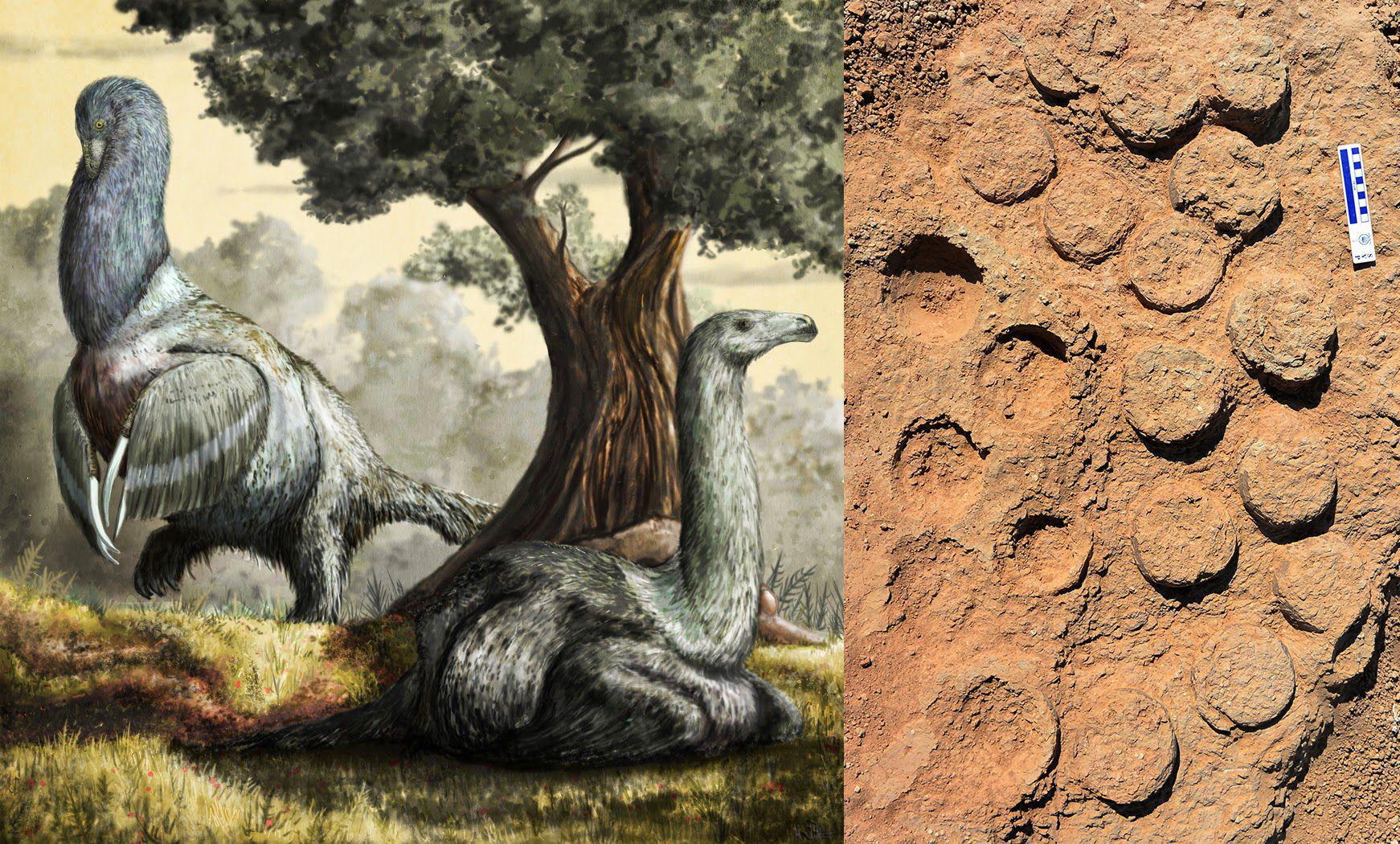 <em>Therizinosaurs</em> and their fossilised eggs.