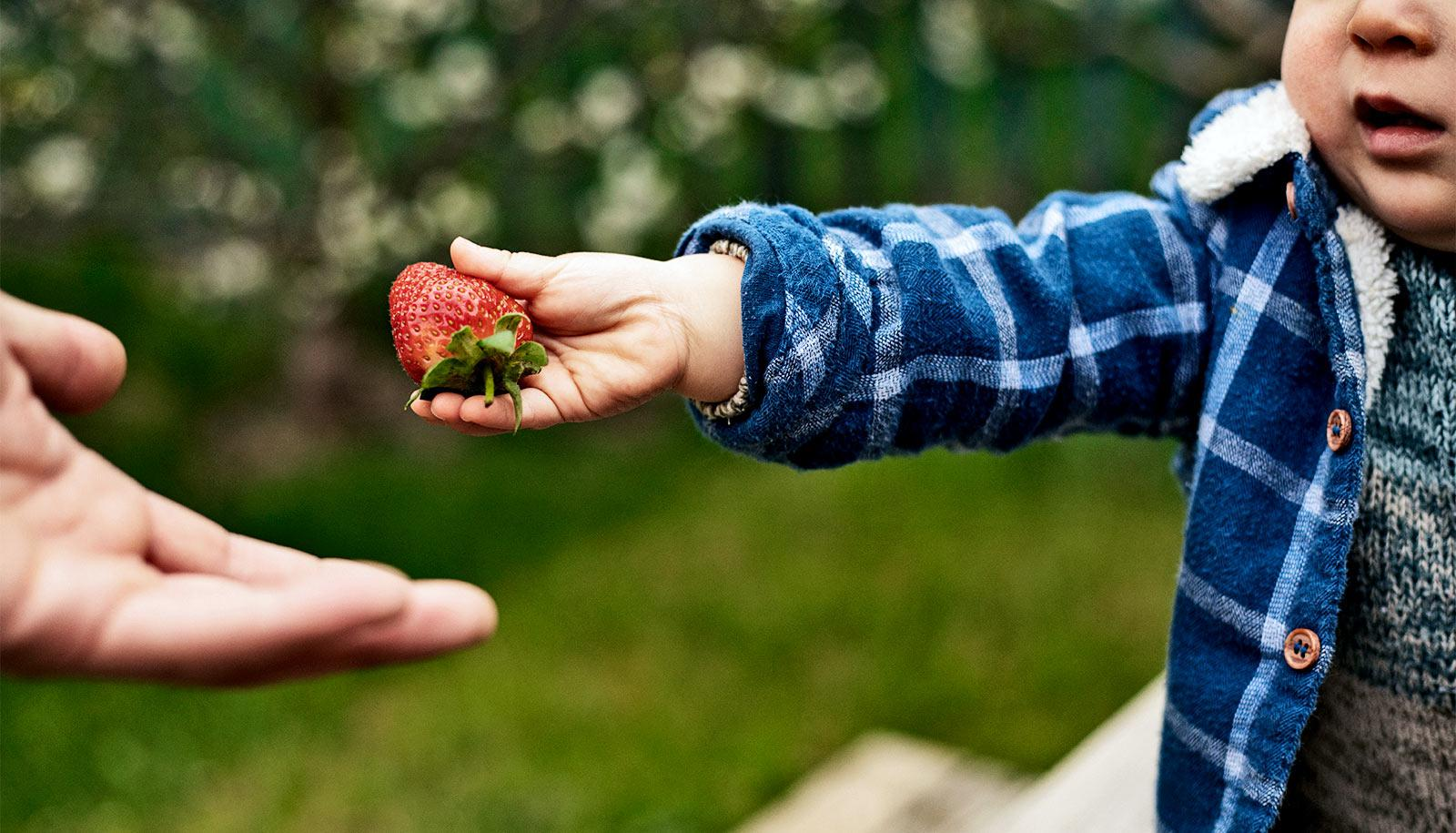 A toddler wearing a blue and white winter coat hands a strawberry to an adult who's off camera, with leaves and grass in the background