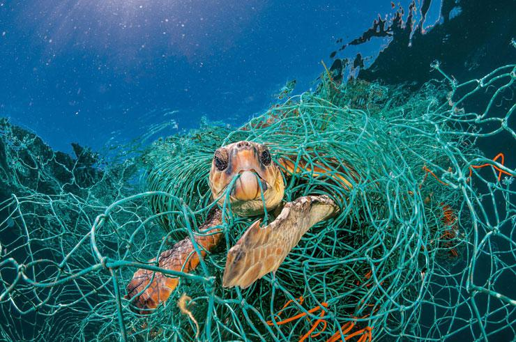 Reducing Plastic Consumption: 5 Ways to Make Your Workplace Plastic-free by Michael Gorman. Photograph of a sea turtle stuck in a fishing next by National Geographic