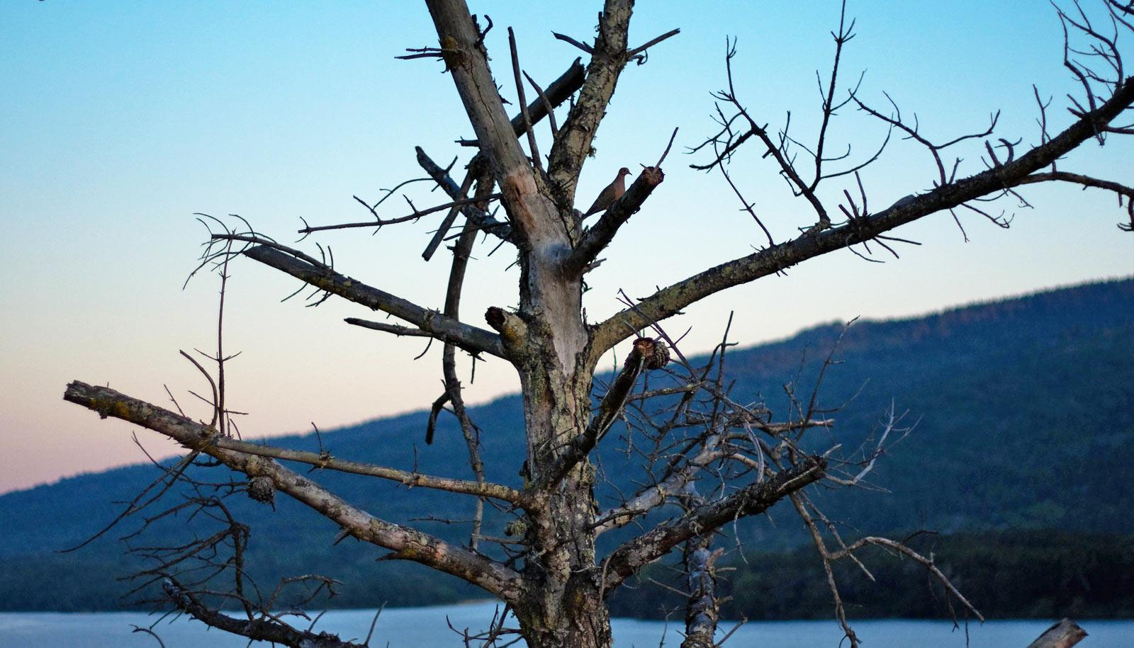 section of dead tree with mountain in background