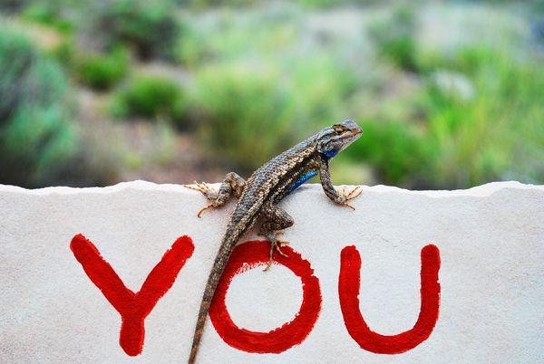lizard word you on wall