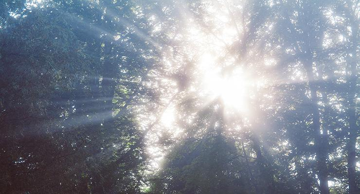 Using your Intuition to Navigate Your Spiritual Growth, by Amy White. Photograph of sunburst through trees by Camilo Jimenez