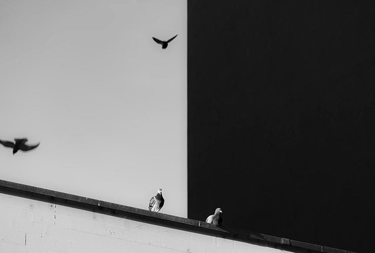 The Rights and Responsibilities of White Privilege in a Time of Racism by Kristen Heimerl. Photograph of pigeons against a white / black contrast wall by Philippe Leone.