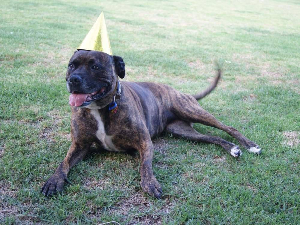 dog with a birthday hat on