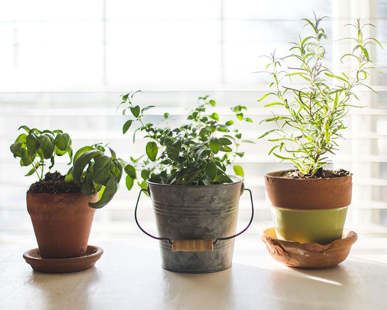 Plant kits for small spaces.