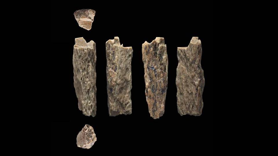 Scientists Stunned By A Neanderthal Hybrid Discovered In A Siberian
