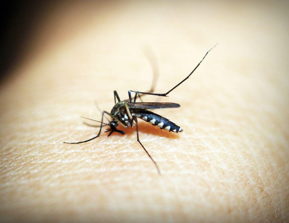 the fever how malaria has ruled humankind for 500 000 years