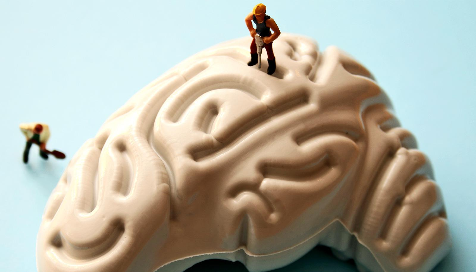 Small figures do construction work on a model of a brain