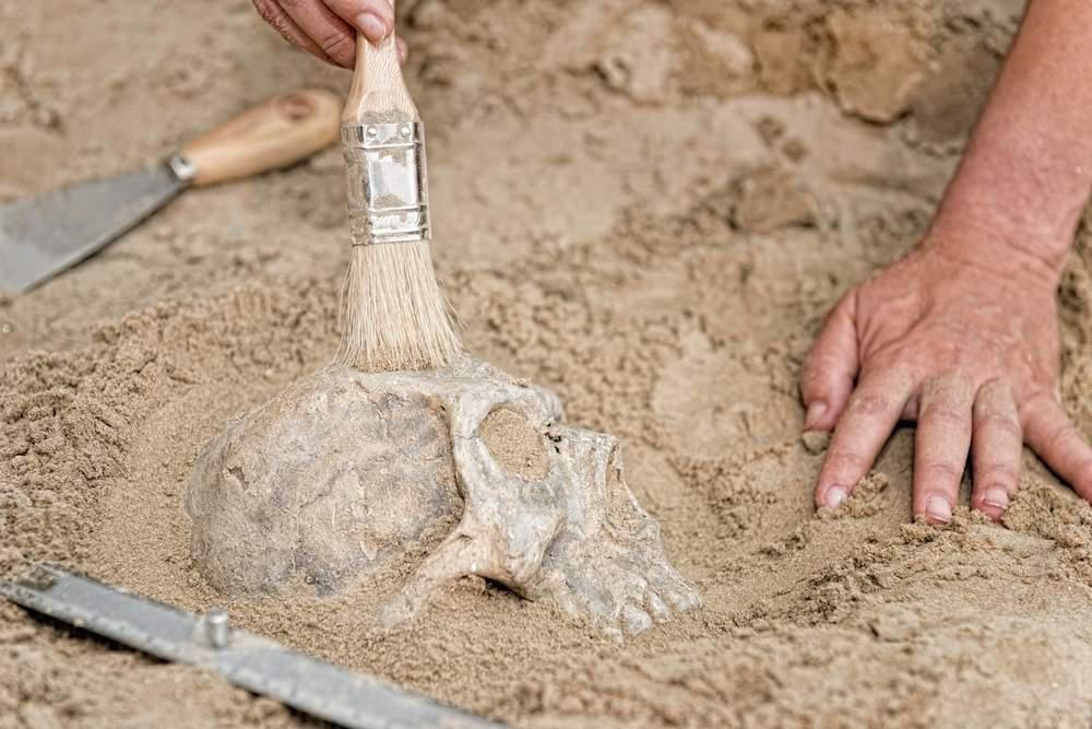cleaning a skull
